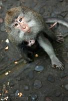 Mother Monkey with Baby by fbcota