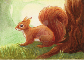 Squirrel by Avanii