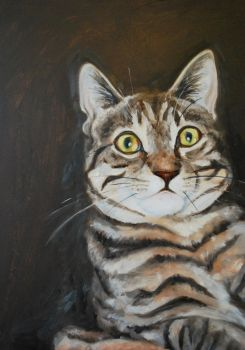 Milly the Tabby by Kite88