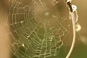 Spider web stock by hyannah77-stock
