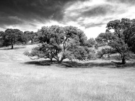 Oak tree therapy by Caliborn4life