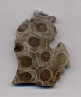 Michigan Petoskey Stone by Undistilled