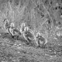 March by TeaDrinkingNomad