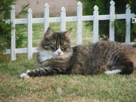 Big Cat or Small Fence? by dsimple