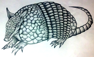 An Armadillo by InfinityFangX