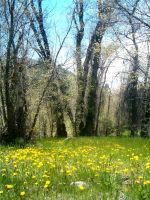 Grassy Meadow by Falln-Stock