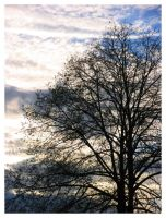 A tree and the sky by ccordovez