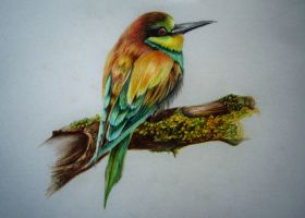 Bird pencil drawing by JuliaBadeeva