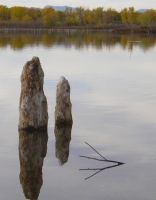 Stumps In Water by PamplemousseCeil