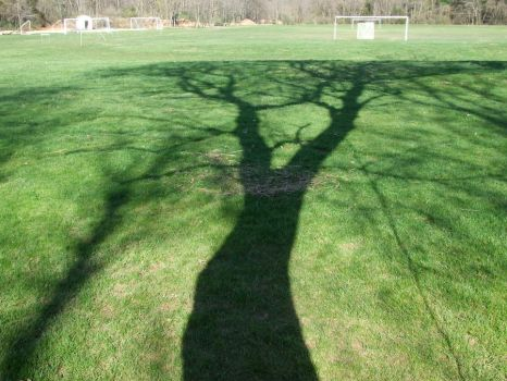 Just a tree's shadow... by AnarchistWombat