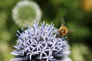 More Insects And Thistles by 53kshun8