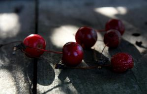 Red Berries I by Verenth