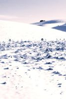 snow fields by aeravi
