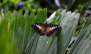 Butterfly in the Forest by Souzay