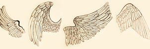 Wing References by Narodenia