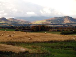 Autumn in Strathconon by piglet365