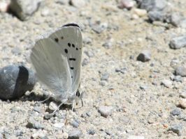 Moth on the Gravel by MaryRose27
