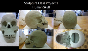 Sculpture Project- Human Skull Finished by Mexican-Lobo