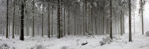 winter forest panorama by sm00keh