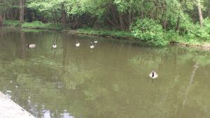 Gathering of the Geese by Dan-S-T
