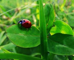 life of the lady bug by rockmylife