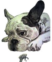 French bulldog stud, commission by Drewnique