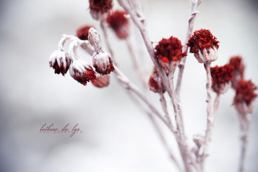 Some blood drop on the calm snow by Luthiae