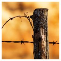 Barbed by rscorp
