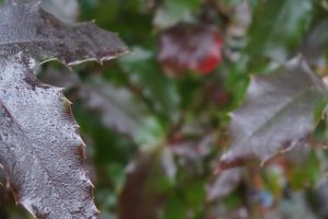 Wet leaves by Mecarion
