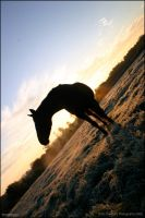 horsey  sunrise by dowdall