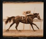 1980 Belmont Race Horse - Woodburning by brandojones