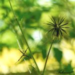 Spot the Spider by FaMz