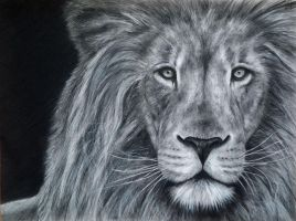 Lion 2014 by Benadia