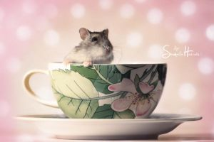 :sweetest little thing: by Shum23