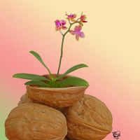 Little Orchid Walnuts by FauxHead