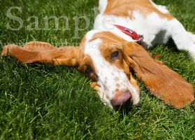 Basset Rescue 2 by BlackDogBarnyard
