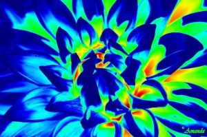 Heat Map of a Flower in the Sun by AGreenGirl
