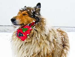 me likes the snow 3 by hermio