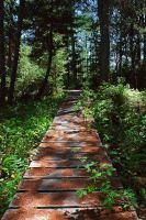 forest path by LucieG-Stock