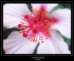 luminance by lucaport