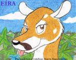 Practicing Eira The Coati by DingoPatagonico