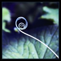 Nature's Spiral of Life by TeaPhotography