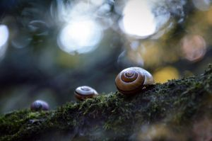 Snails family by gorzkaczekoladka