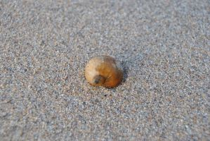 Snail Shell by Orkekum
