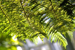 Green Ferns in the Botanical House by Bluebuterfly72
