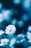 BlueBabyBreath... by FurImmerUndEwig