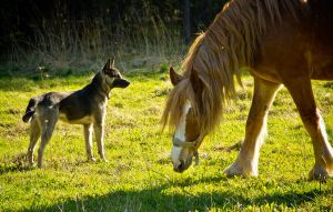Horse and dog by Gladhnes