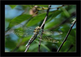 A four-winged monster by Rajmund67