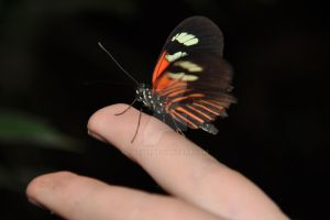 butterfly up close on my finger by tazy01