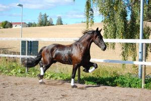 Horse stock 62 by Ulvar-Stock